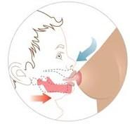 Rôle de la prévention en orthodontie