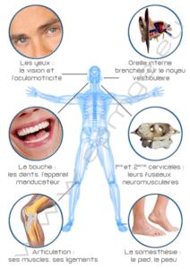 Posture et Orthodontie